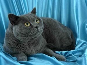 удивительные существа - кошки
