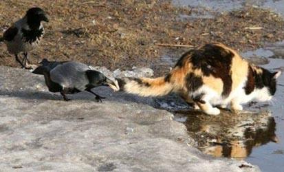 кот и ворона