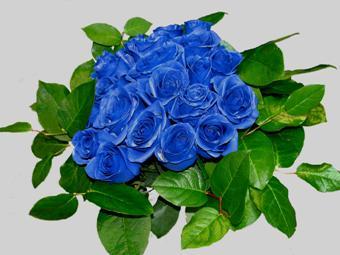 Чтобы вырастить натуральные синие розы ученые потратили 20 лет