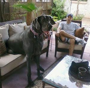 самая большая собака в мире_