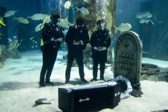 похороны рыб в лондонском океанариуме